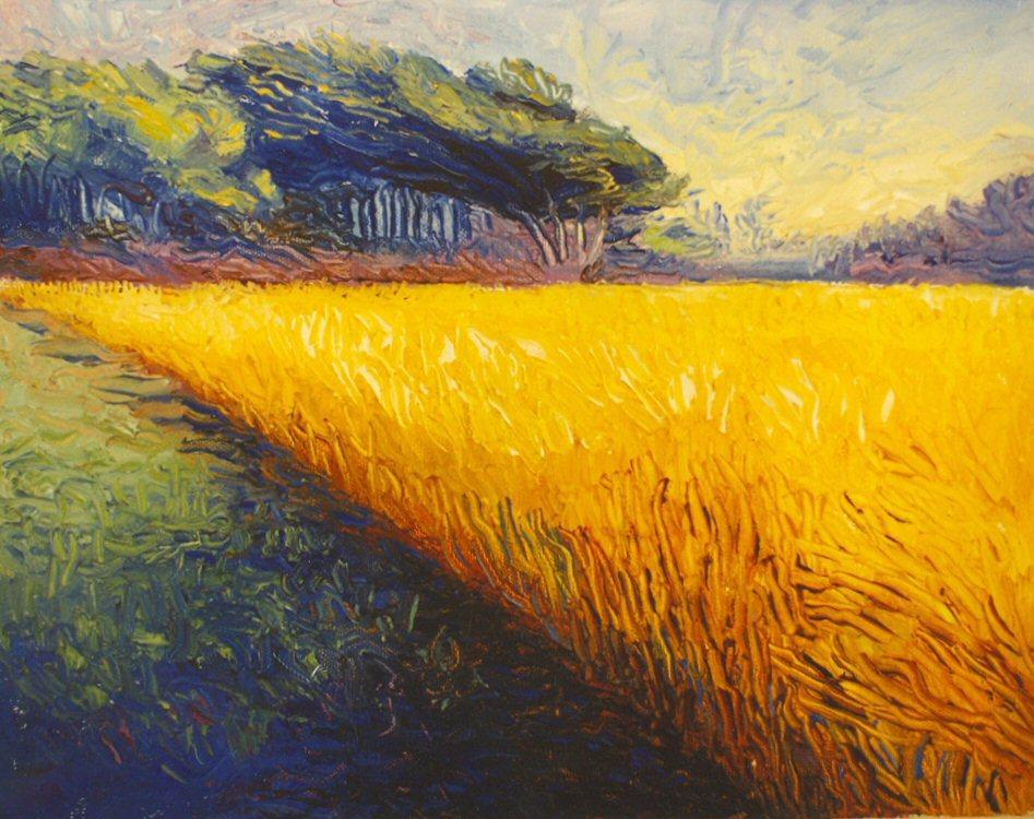 A yellow field.jpg