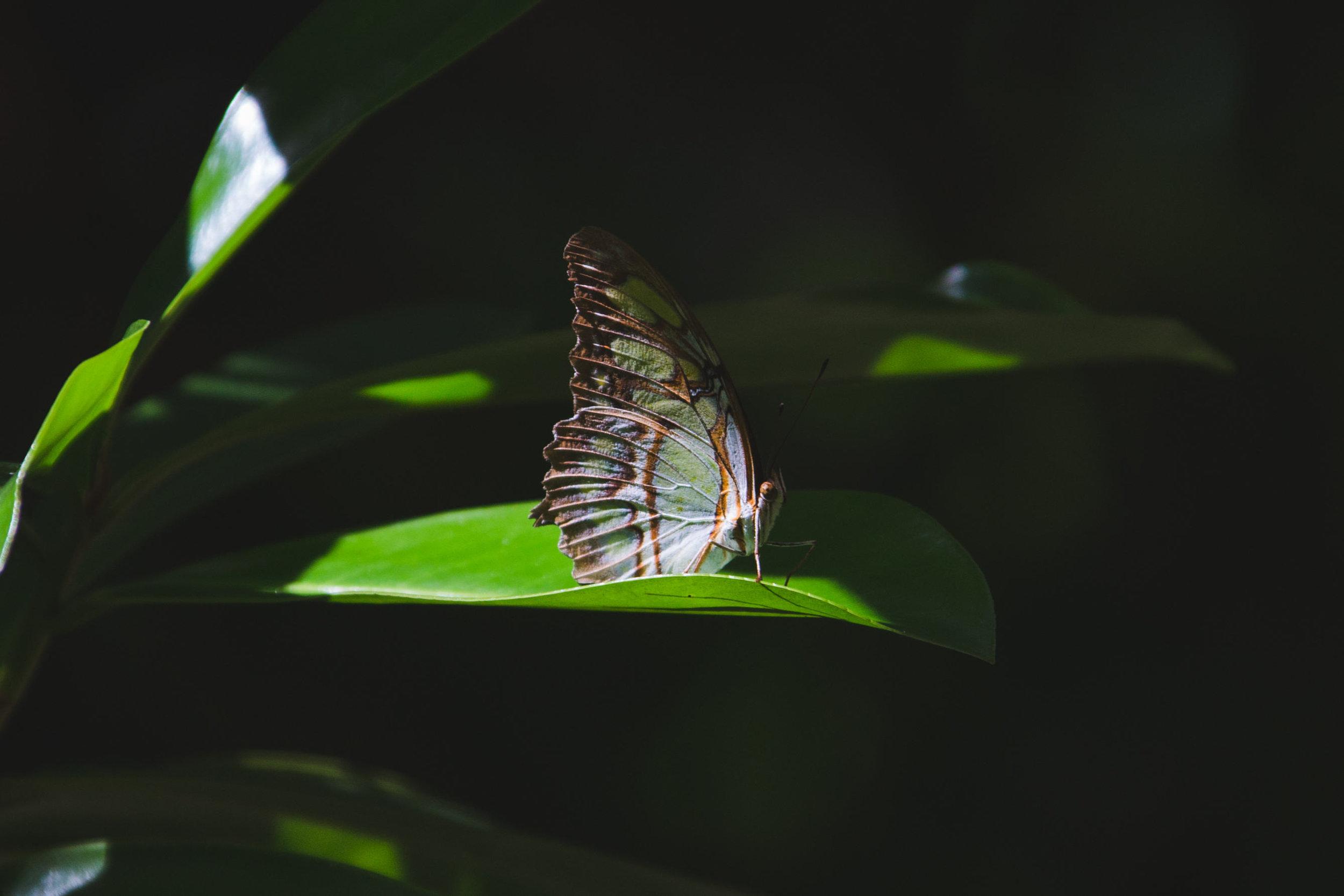 Nosara_Costa_Rica+(160+of+64).jpg