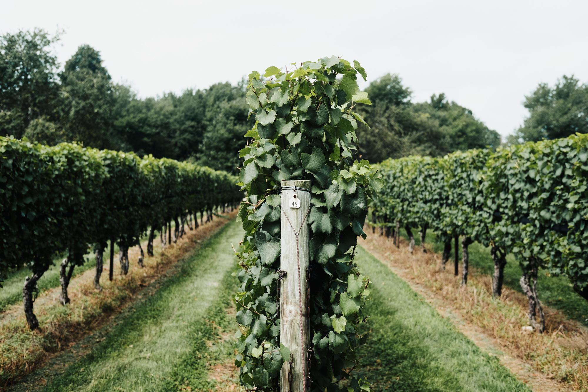 Wedding_Francis_Boucher_Jonathan_Edwards_Winery_2018-1.jpg