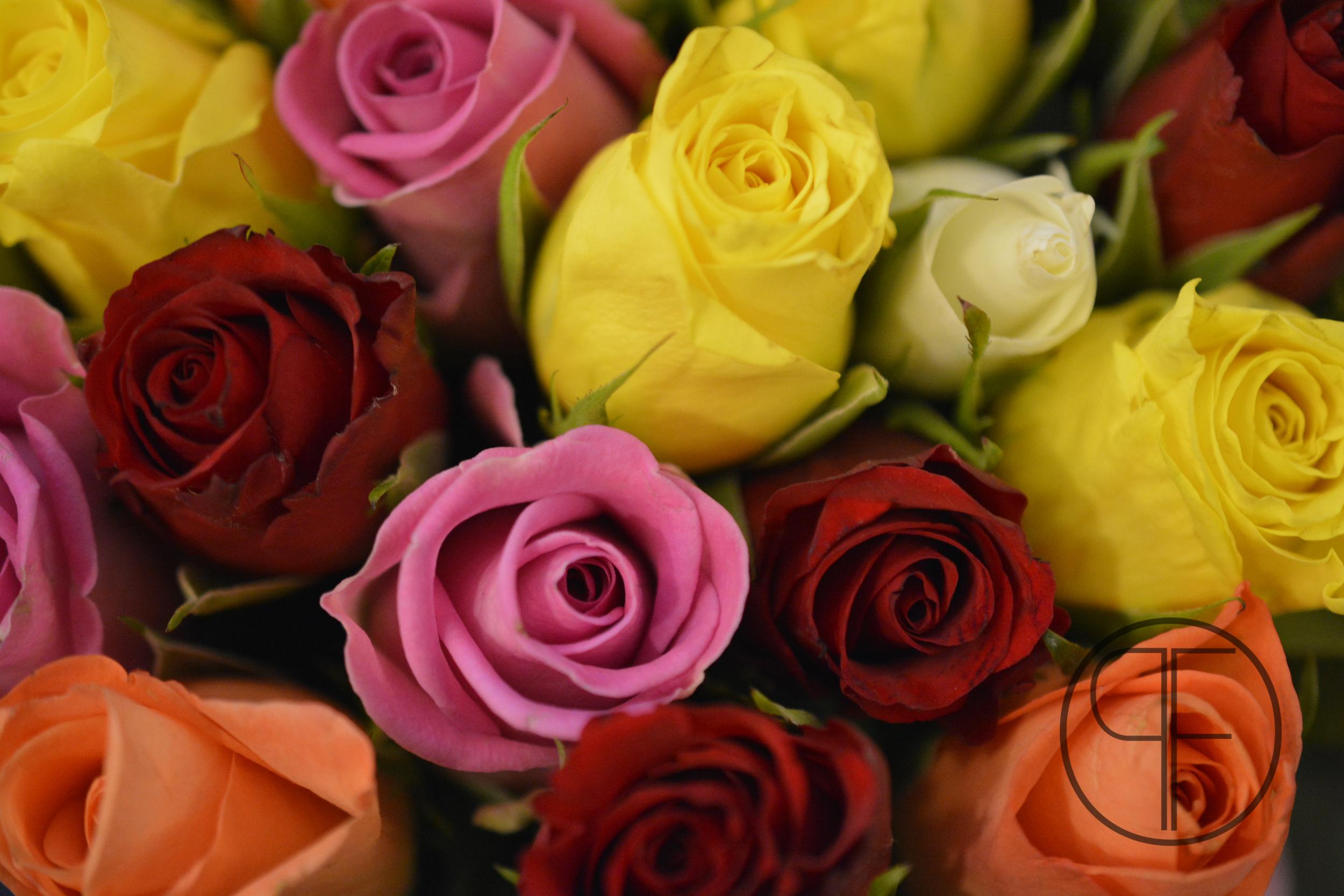 coloured roses.jpg