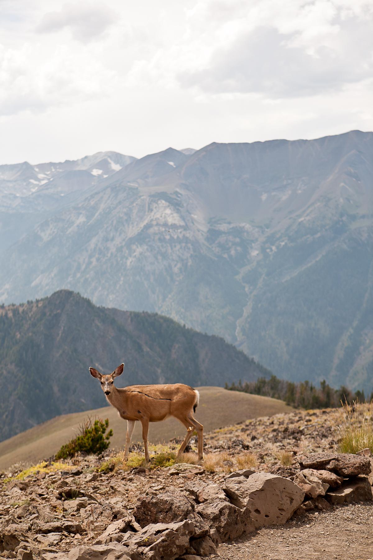 Wallowa Mountains, OR