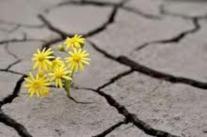 Flower-in-concrete.jpg