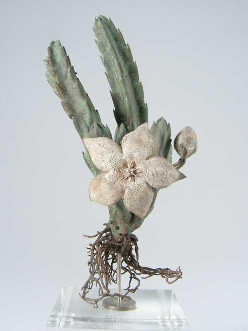 Nic Bladen-Stapelia grandiflora.jpg