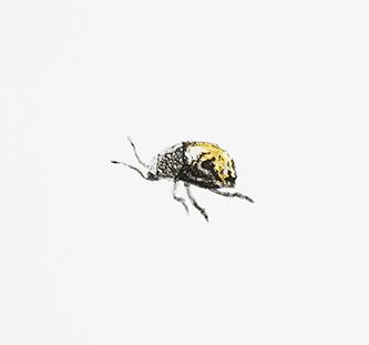 Jane-Eppel,-Beetle,-Etching,-150x150.jpg