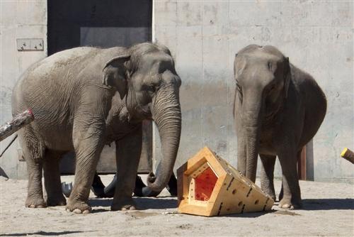 ElephantToyPic1.photoblog500 copy.jpg