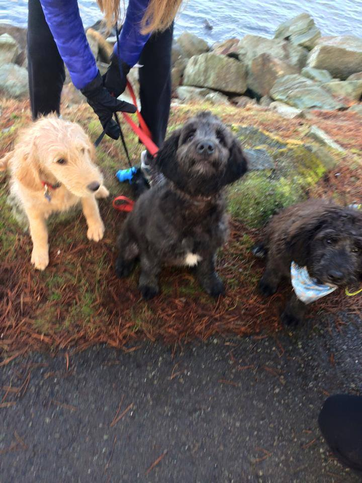 We tried to take a cute Doodle photo during our walk today. Getting three dogs to pose is not as easy as one would think. We all love our Doodles! We have regular play dates and sometimes they have been known to have sleepovers. smile emoticon Your dogs make the best puppies!  — with  Teresa Werner