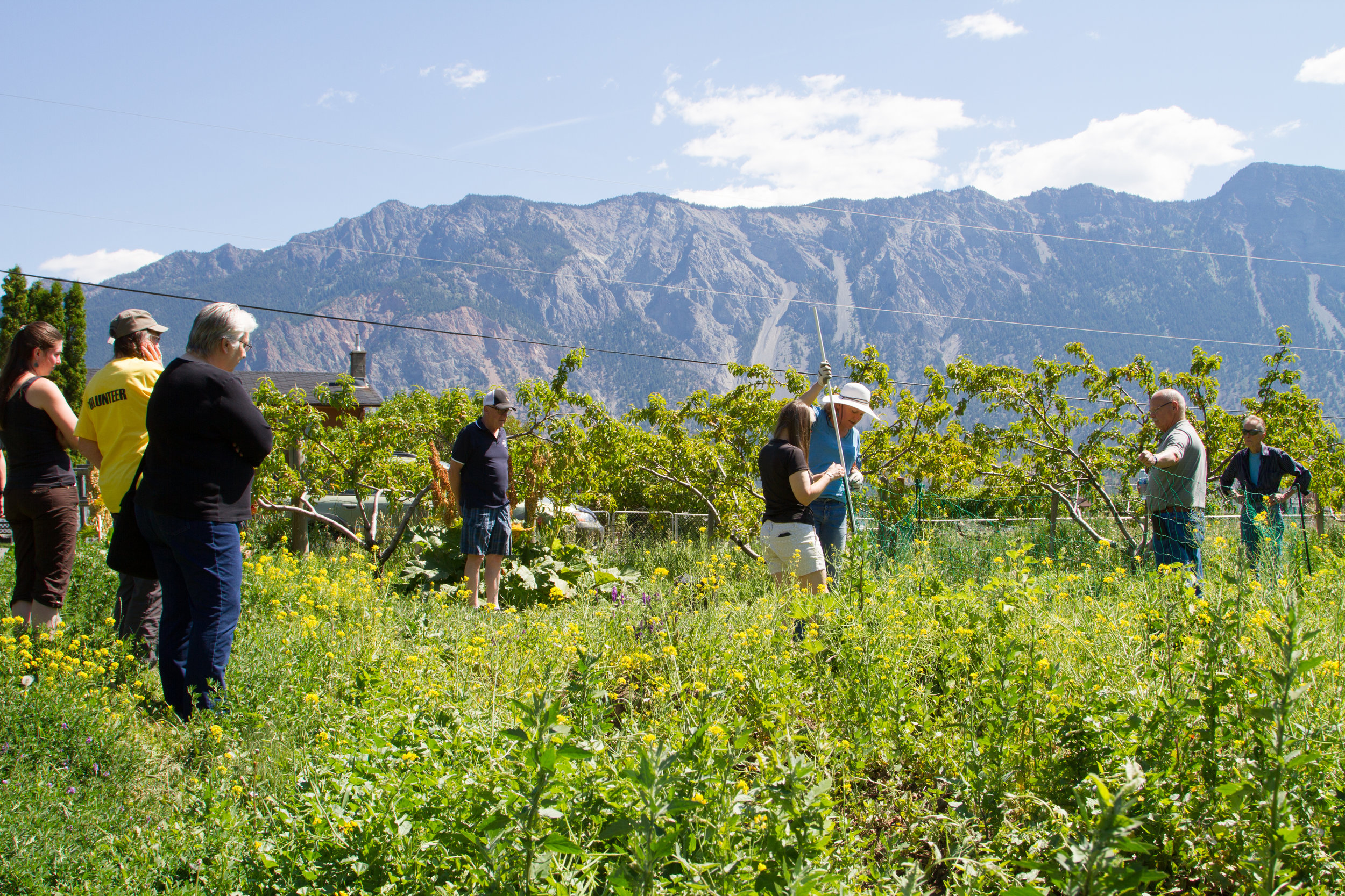 Participants in Lillooet assist Gillian Sanders with the setup of a temporary electric fence at the Ucwalmicw Community Garden.