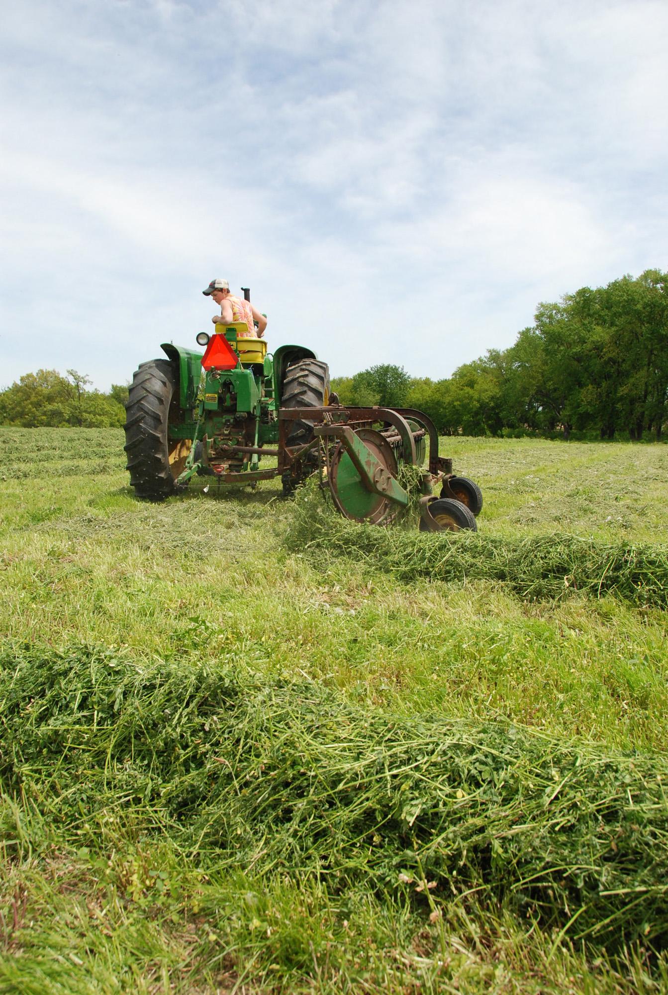 Raking hay 17.jpg