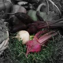 Red Round Turnip Highlighted.jpg