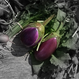 Short purple eggplant highlighted.jpg