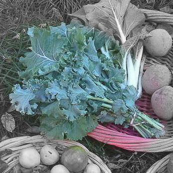 Beedy's camden kale highlighted-2.jpg