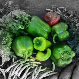 Green pepper Highlighted.jpg
