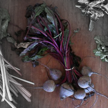 Bull's blood beets highlighted.jpg