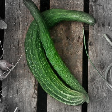 Long cucumber highlighted.jpg