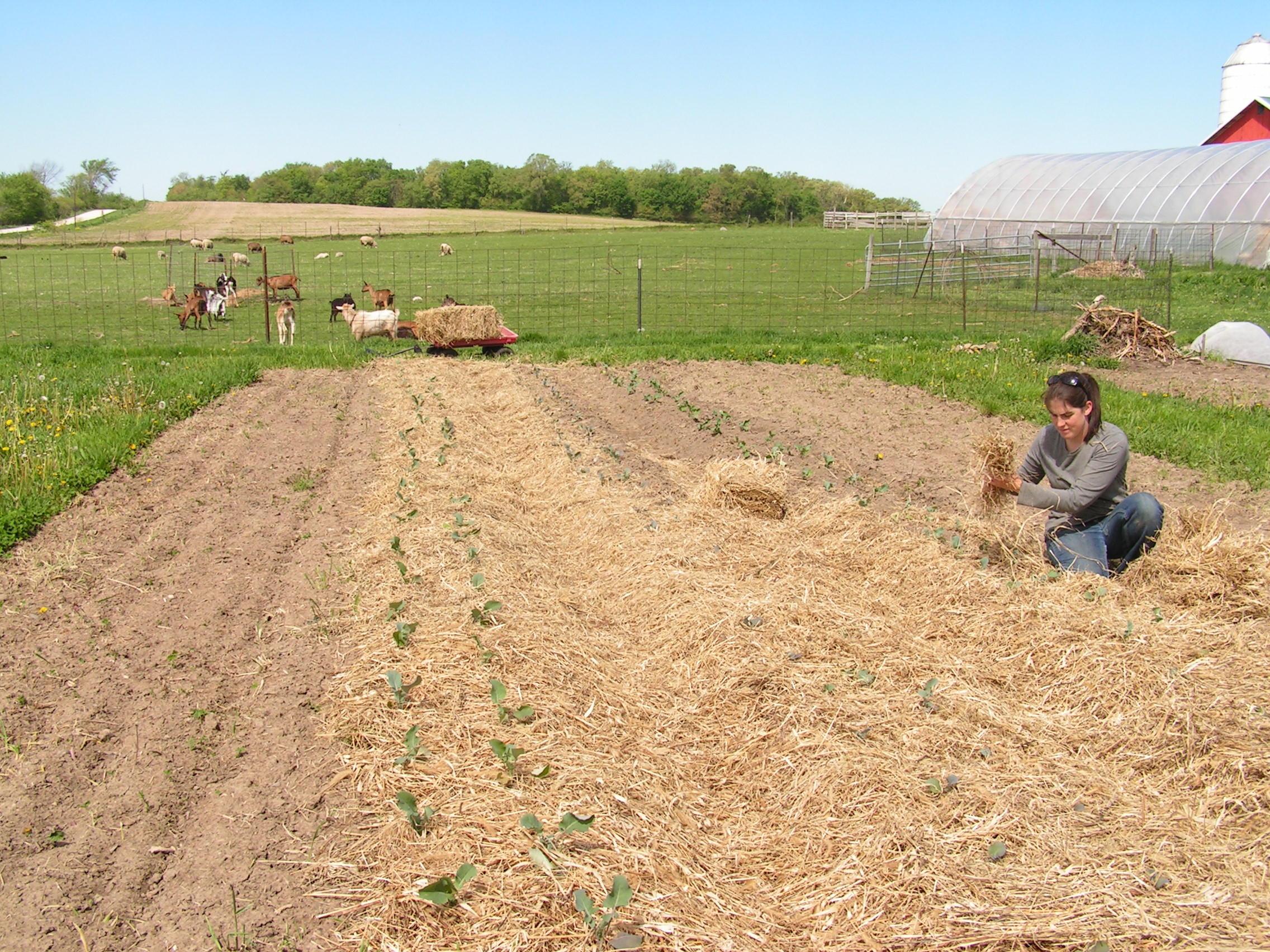 Prairie Grass Mulch-1.jpg