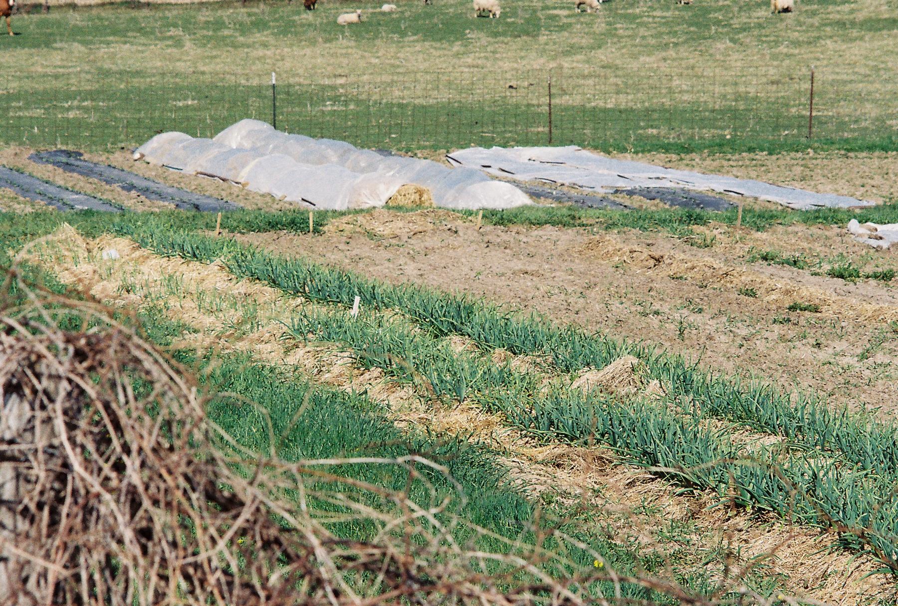 Prairie Grass Mulch-3.jpg
