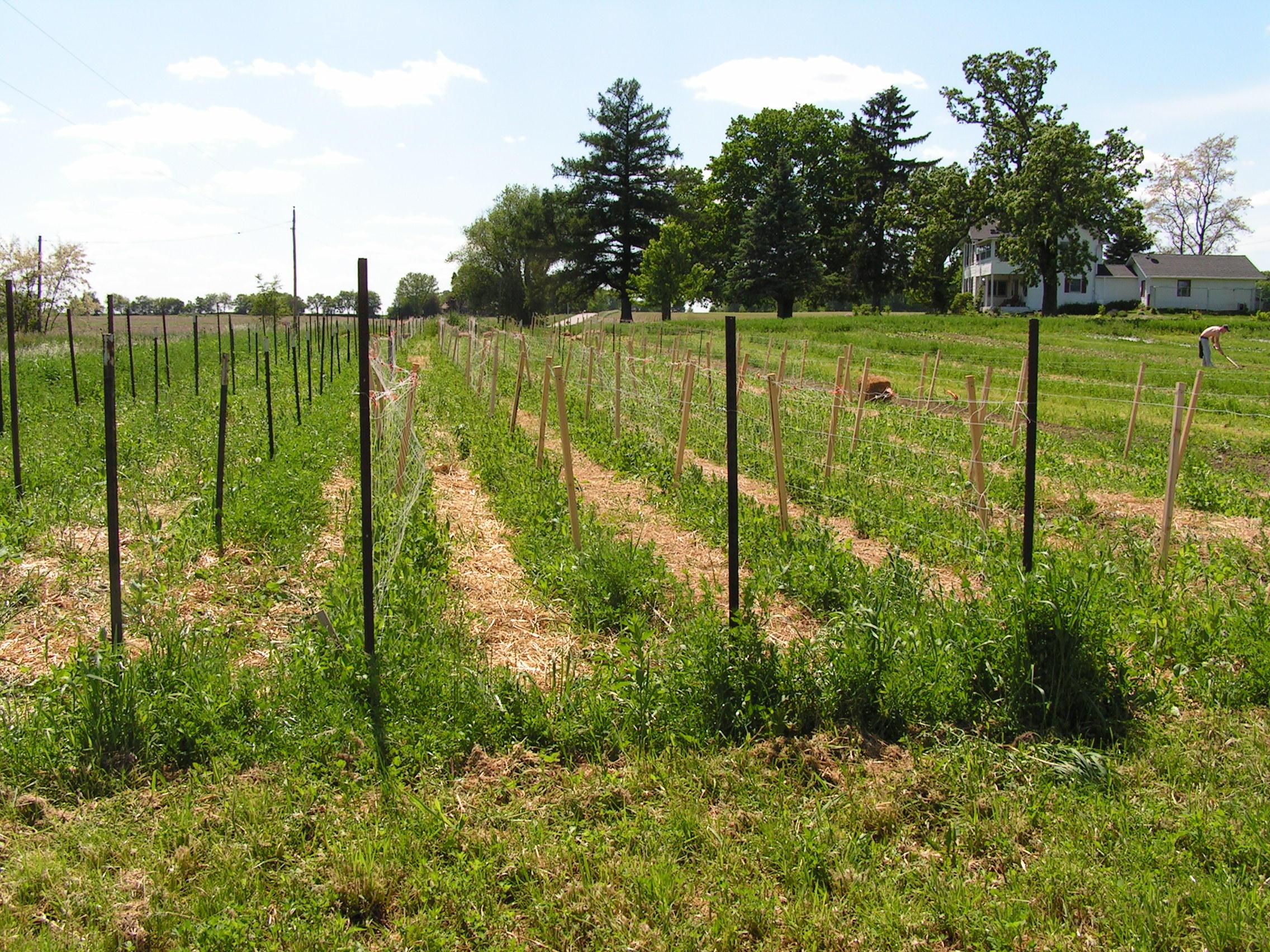 Prairie Grass Mulch-5.jpg