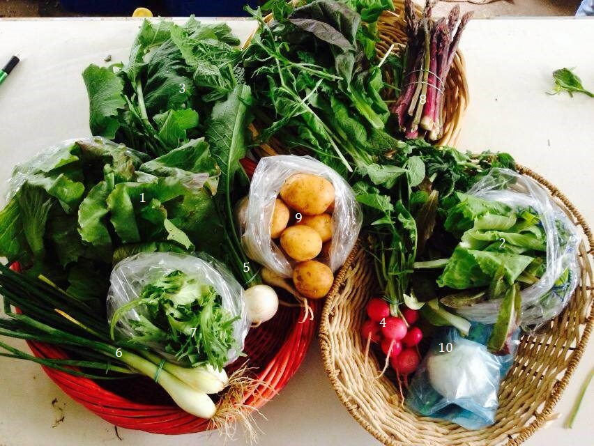 1. Red Iceberg lettuce, 2. Lettuce mix, 3. Spicy greens mix, 4. Pink Beauty radishes, 5. Hakurei turnips, 6. Early onions, 7. Curly endive, 8. Asparagus, 9. Gold potatoes, 10. Gift of Dela's goat cheese.