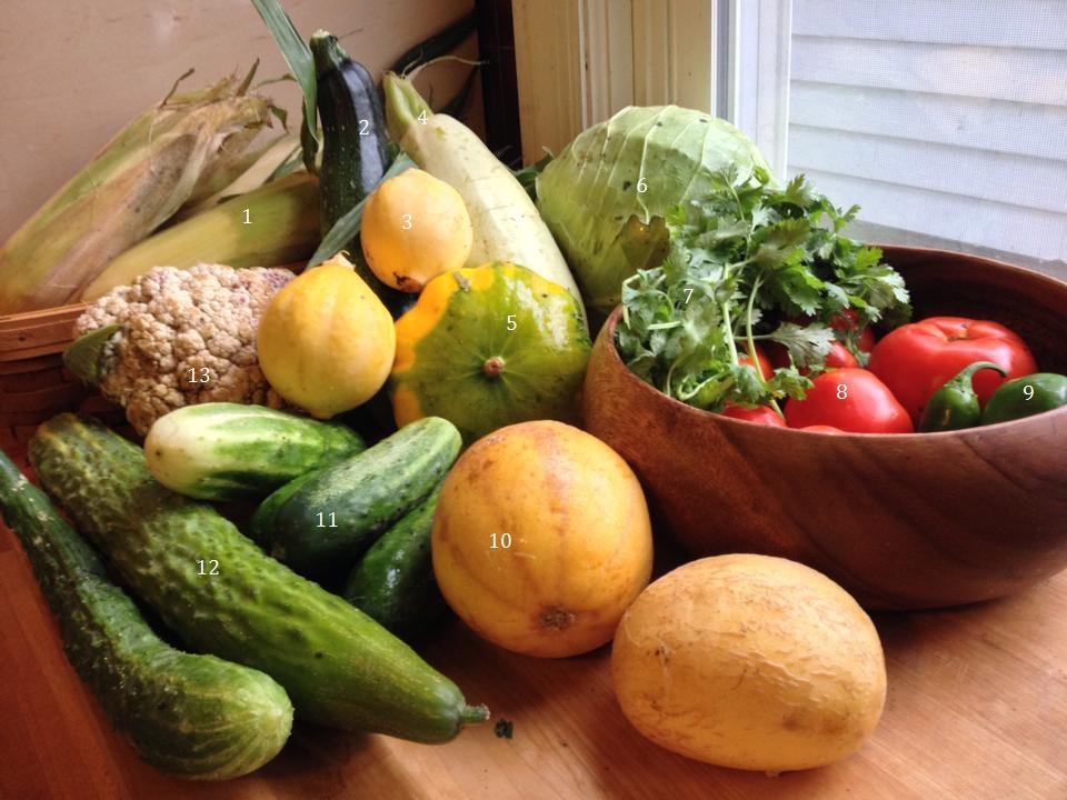 1. Sweet corn, 2. Zucchini, 3. Lemon squash, 4. Lebanese white squash, 5. Patty pan squash, 6. Cabbage, 7. Cilantro, 8. Tomatoes, 9. Sweet and hot peppers, 10. Heirloom tomatoes, 11. H19 cucumber, 12. Shuyo long cucumber, 13. Cauliflower