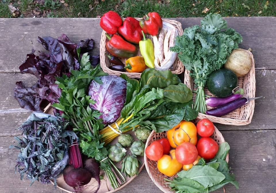 Purple peacock OR broccoli, beets, Red venture celery, cabbage, chard, artichokes OR okra, bell peppers, hot peppers, Dragon Tongue OR green beans, kale, melon, eggplant, tomatoes, and sorrel.