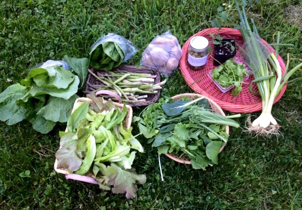 Chinese cabbage, romaine lettuce, asparagus, potatoes, farmstead pickles, Iglheart cherry tomato plant, cilantro, bunching onions, spicy greens mix, lettuce mix.