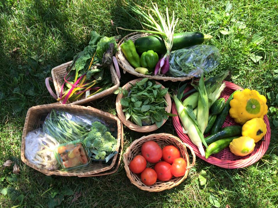 Artisan cherry tomatoes, dragon tongue beans, maxibel French green beans, broccoli, bright lights chard, cucumbers, assorted peppers, Italian red onions, zucchini or Mediterranean squash, Kentucky wonder pole beans, basil, early bicolor sweet corn, patty pan squash, assorted tomatoes.