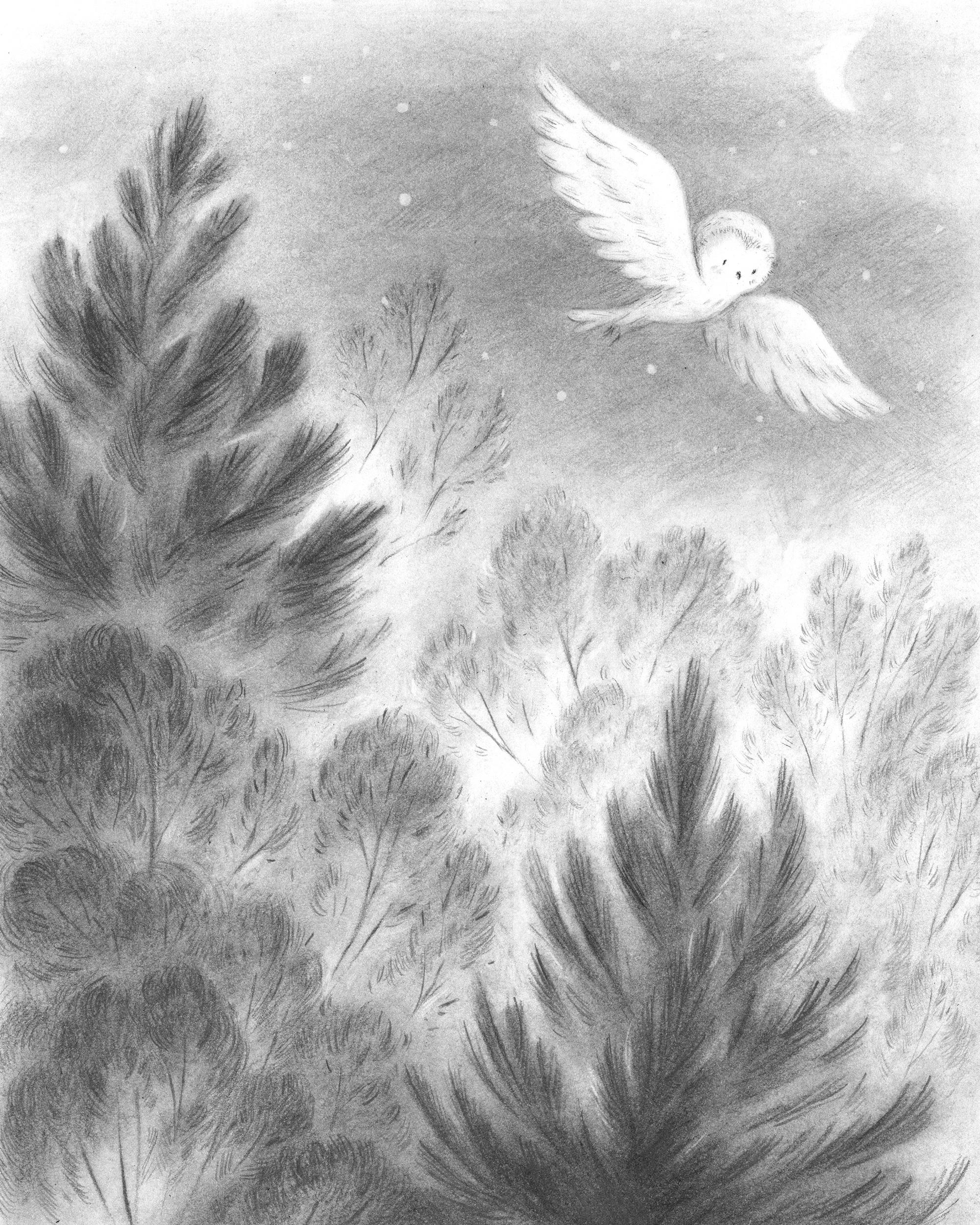 Owl-Woods-jennifer-a-bell.jpg