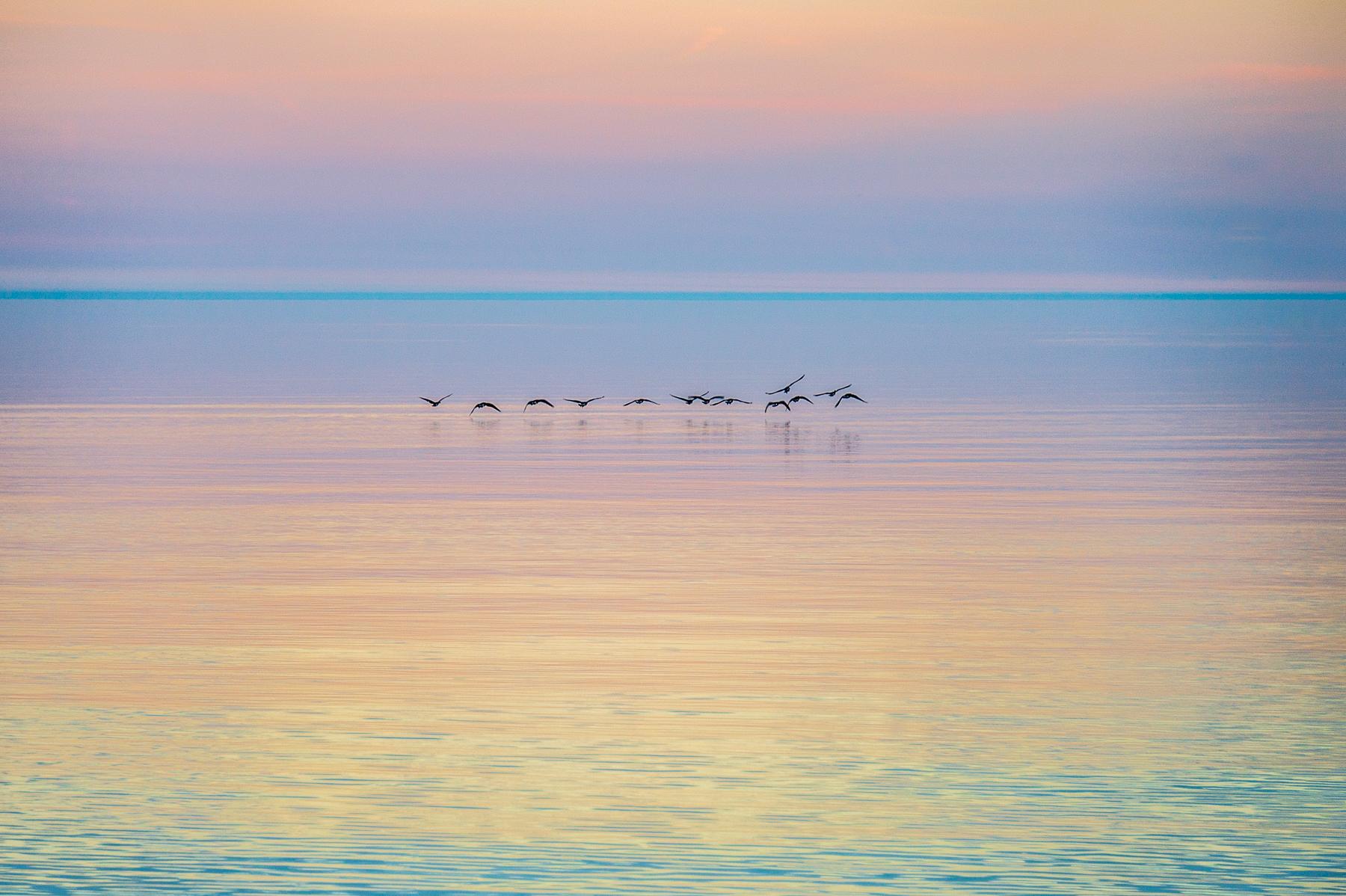 """""""Canada Geese at Dawn"""""""