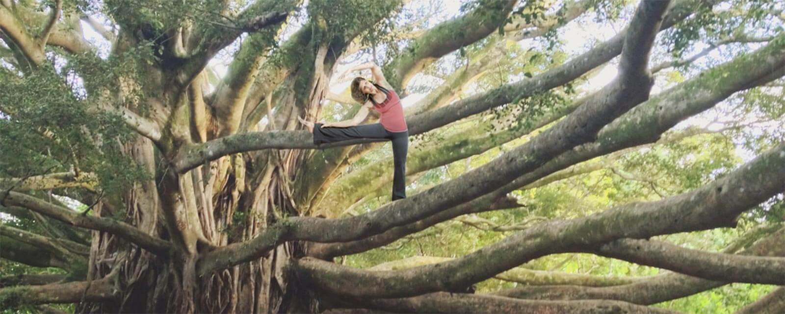Tree Stretch
