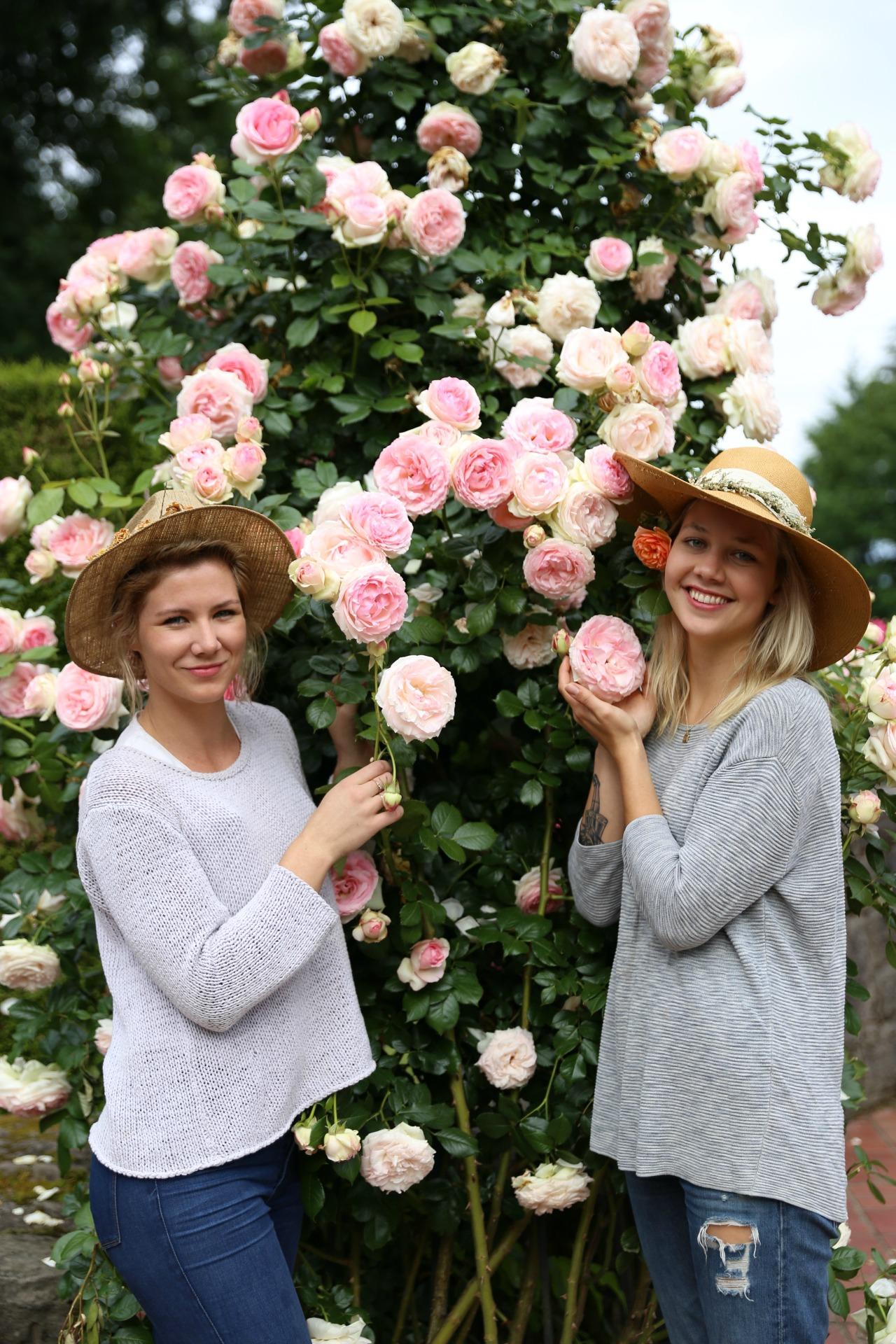 rosegarden10.jpg