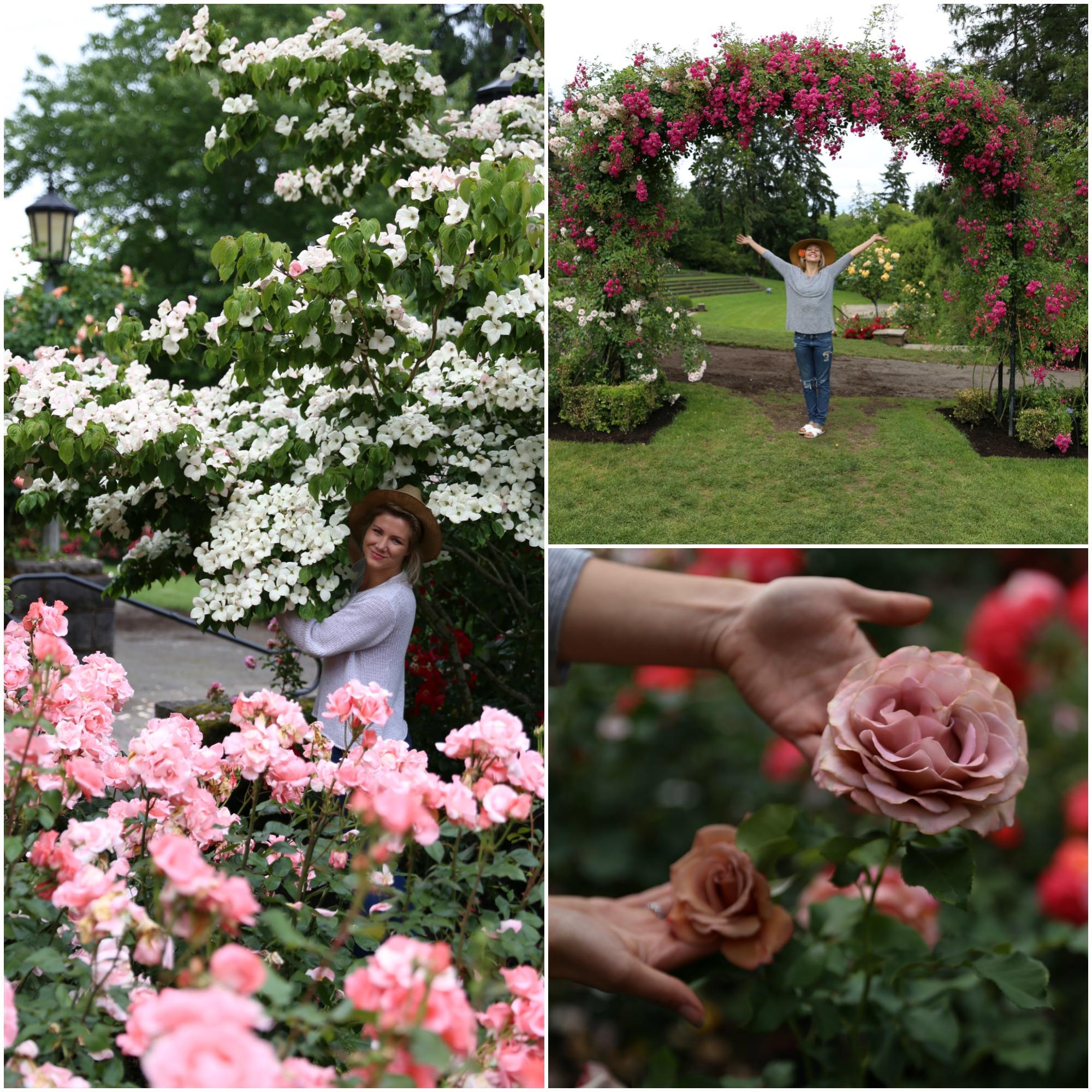 rosegarden12.jpg