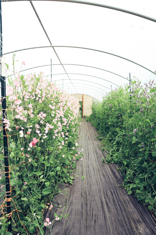 Oh Flora Travels, Floret 2017-4.jpg