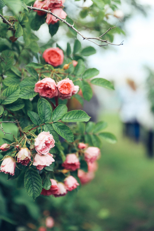 Oh Flora Travels, Floret 2017-7.jpg