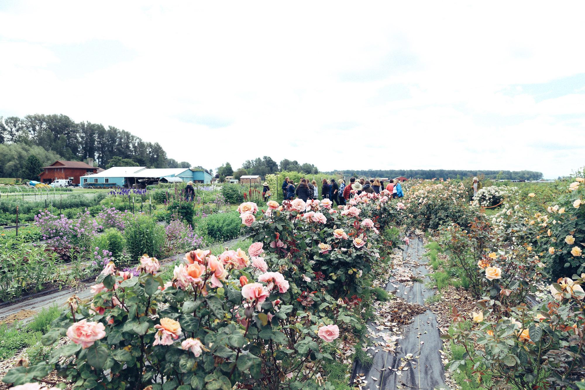 Oh Flora Travels, Floret 2017-11.jpg