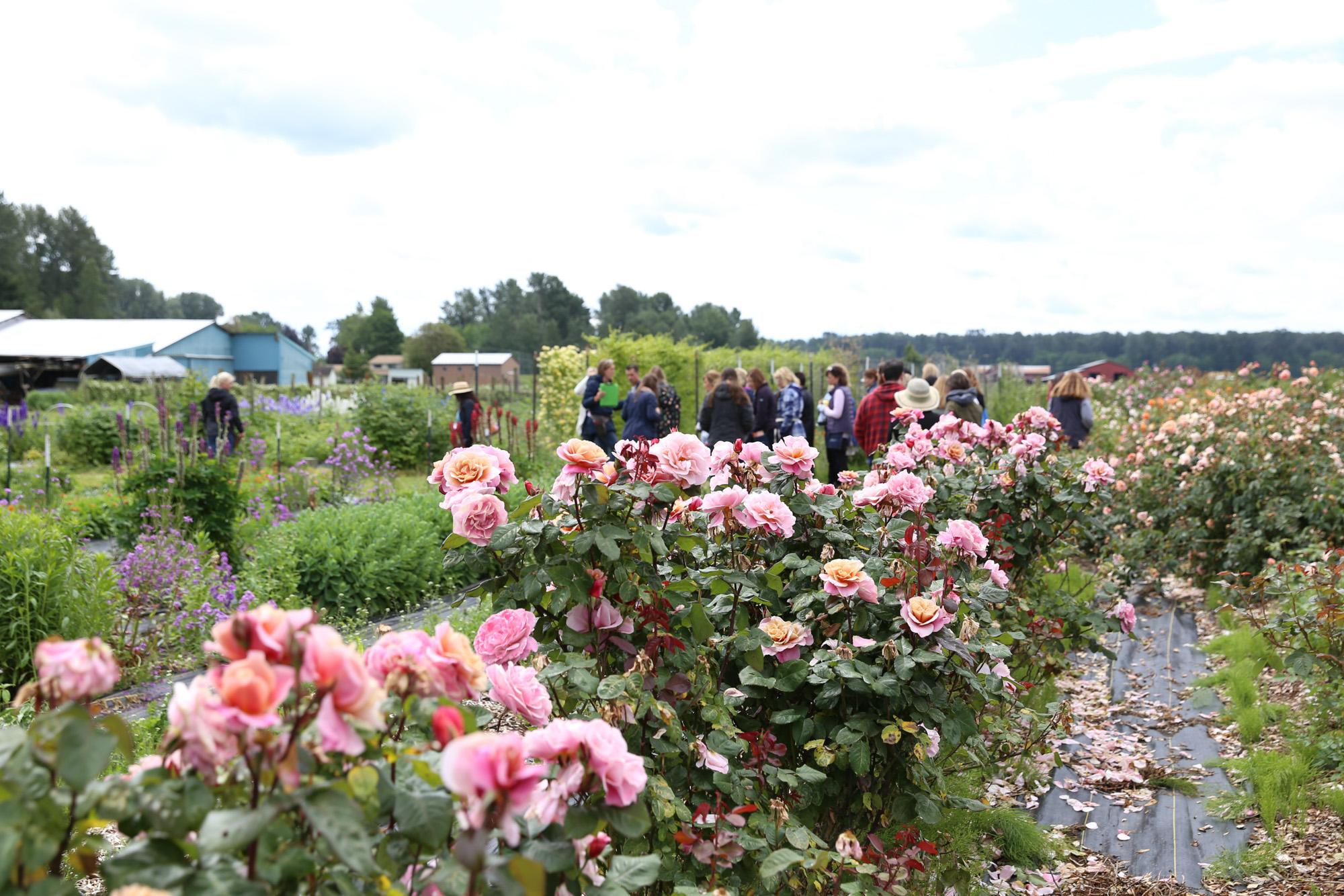 Oh Flora Travels, Floret 2017-12.jpg
