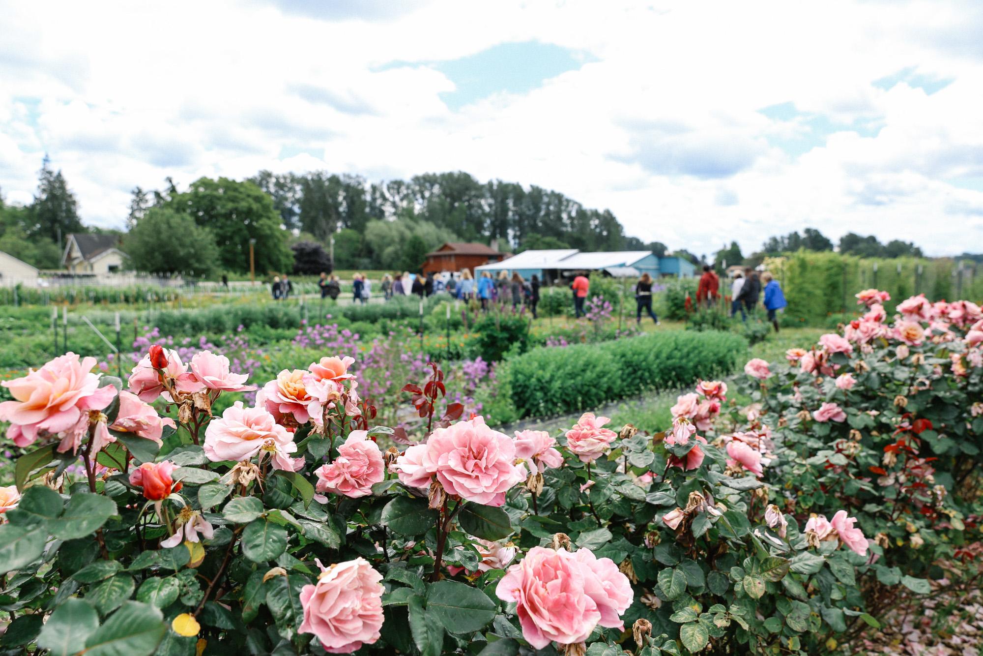 Oh Flora Travels, Floret 2017-14.jpg