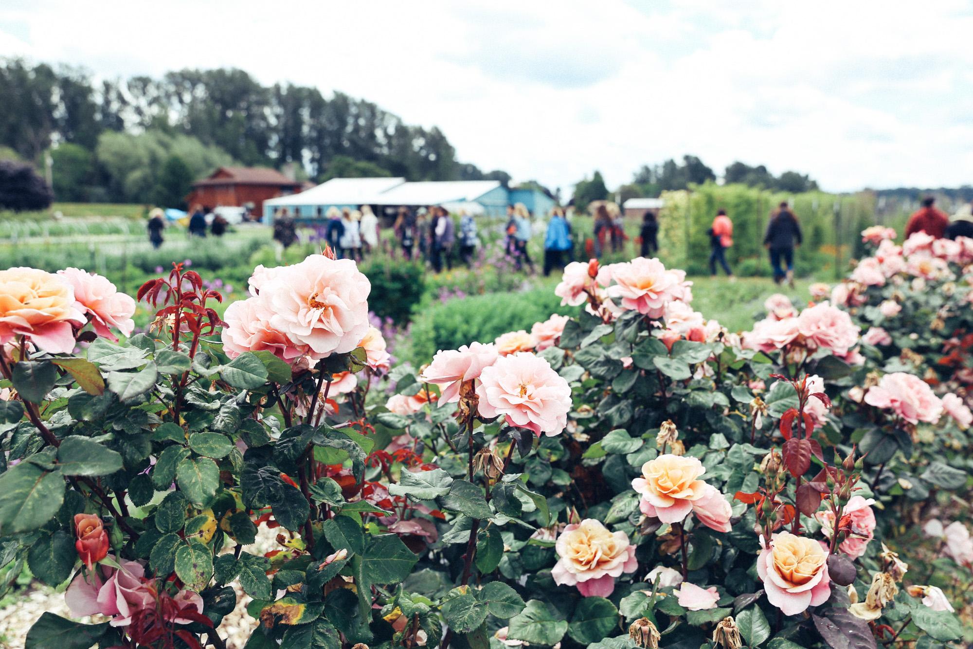Oh Flora Travels, Floret 2017-13.jpg