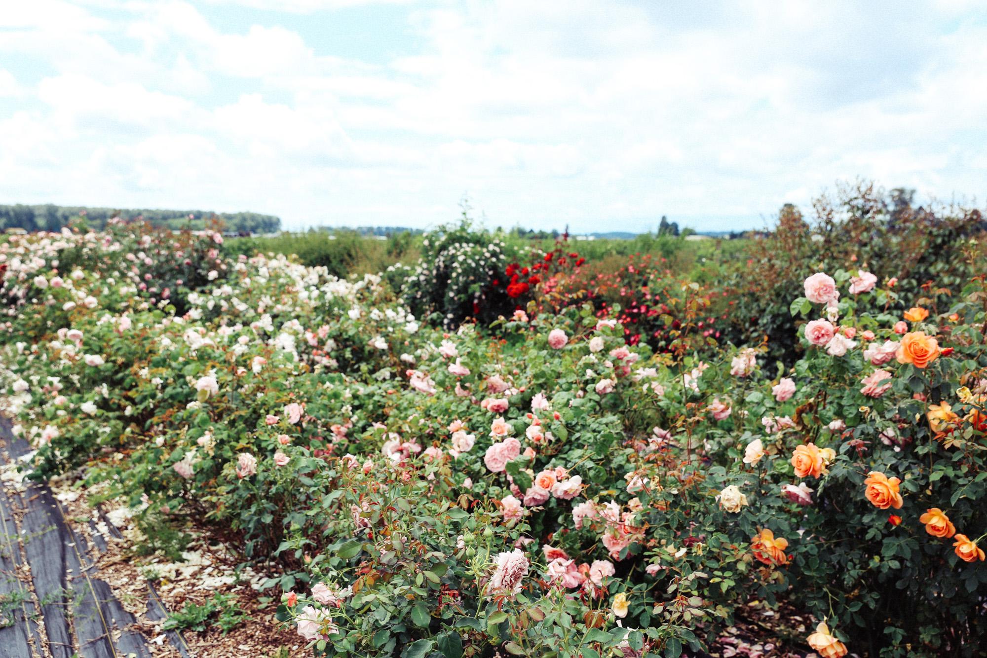 Oh Flora Travels, Floret 2017-17.jpg