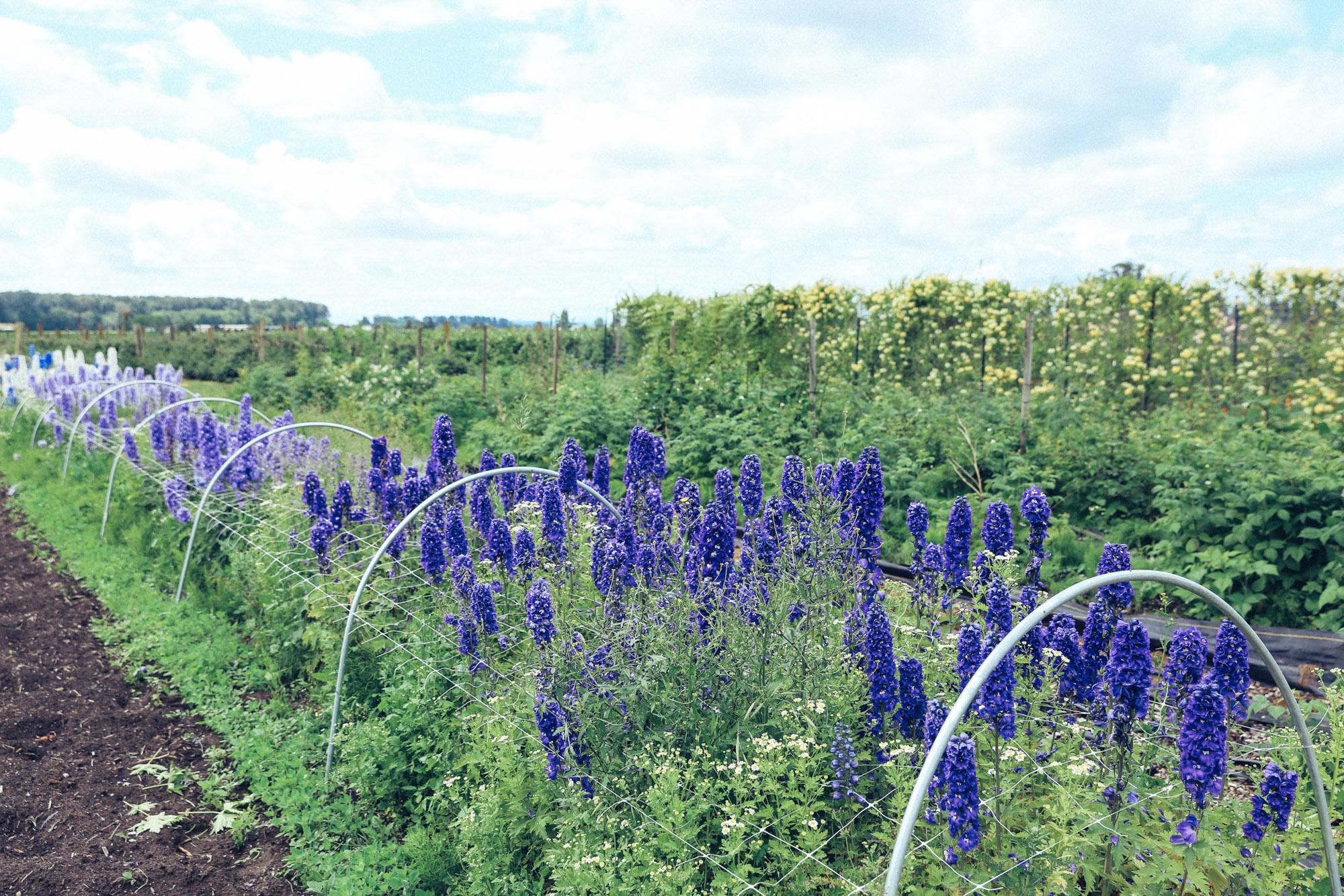Oh Flora Travels, Floret 2017-19.jpg