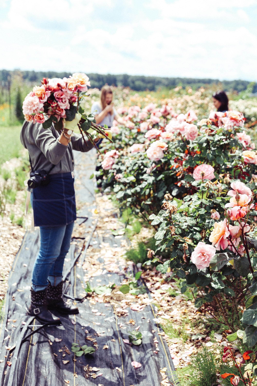 Oh Flora Travels, Floret 2017-22.jpg