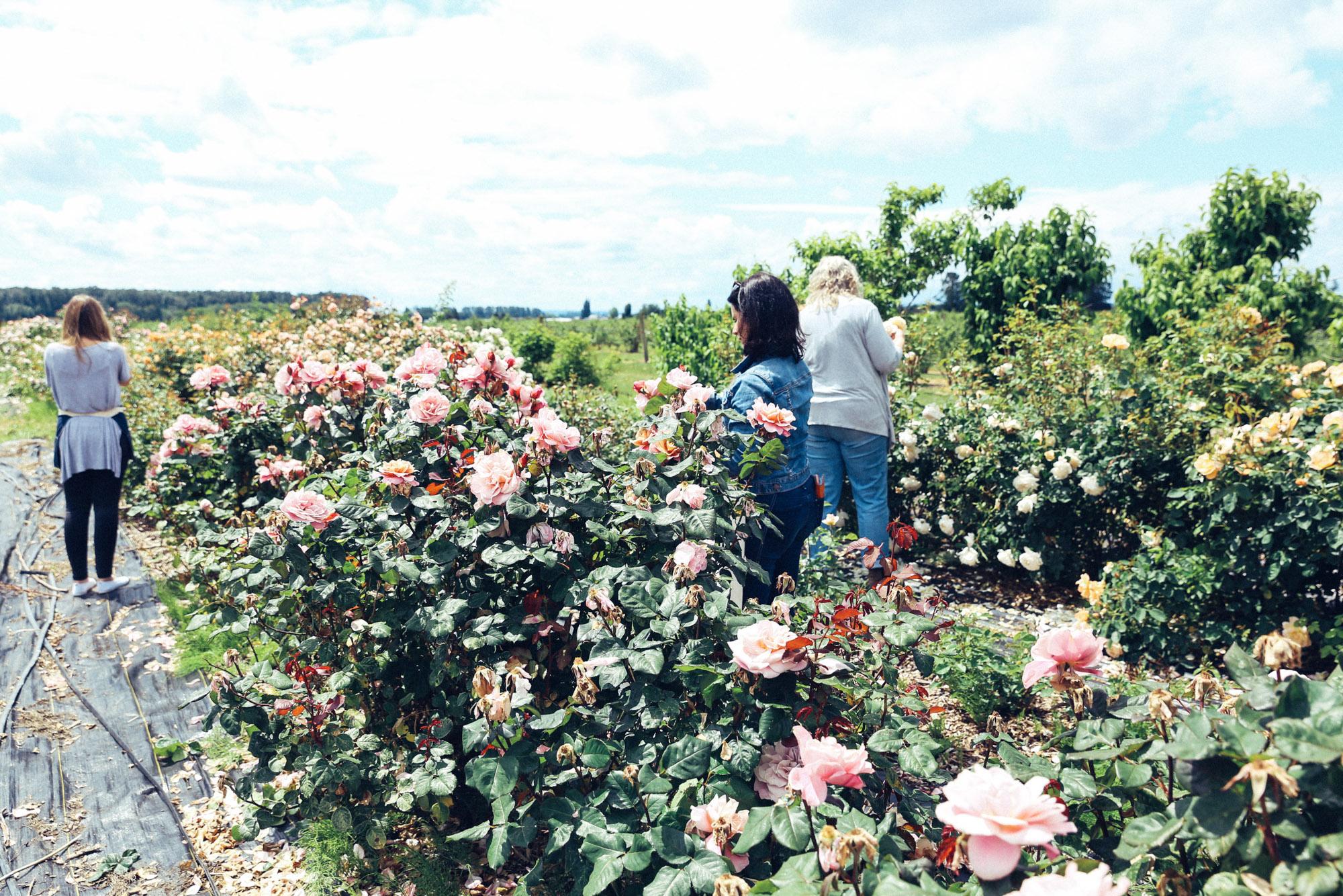 Oh Flora Travels, Floret 2017-23.jpg