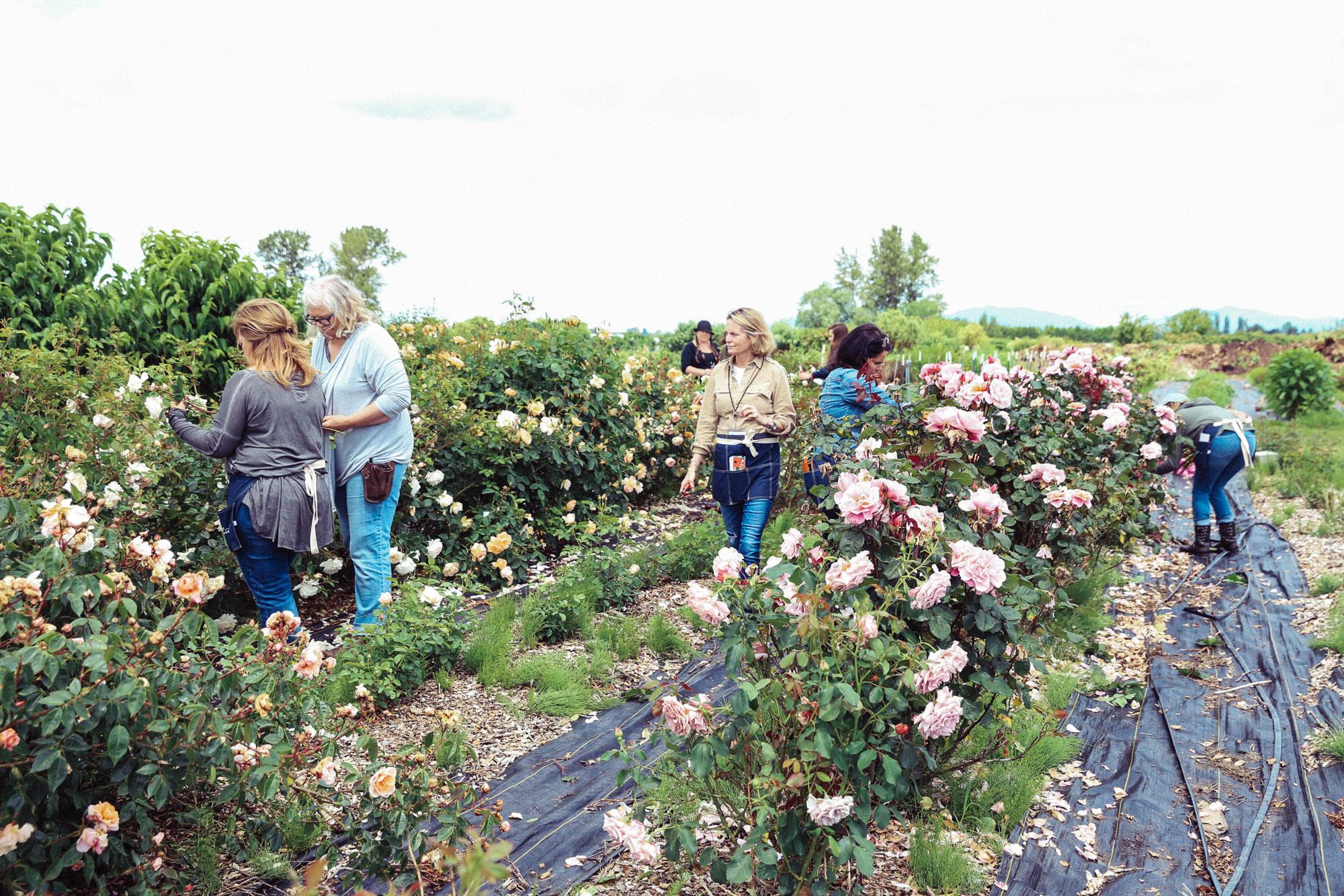 Oh Flora Travels, Floret 2017-24.jpg