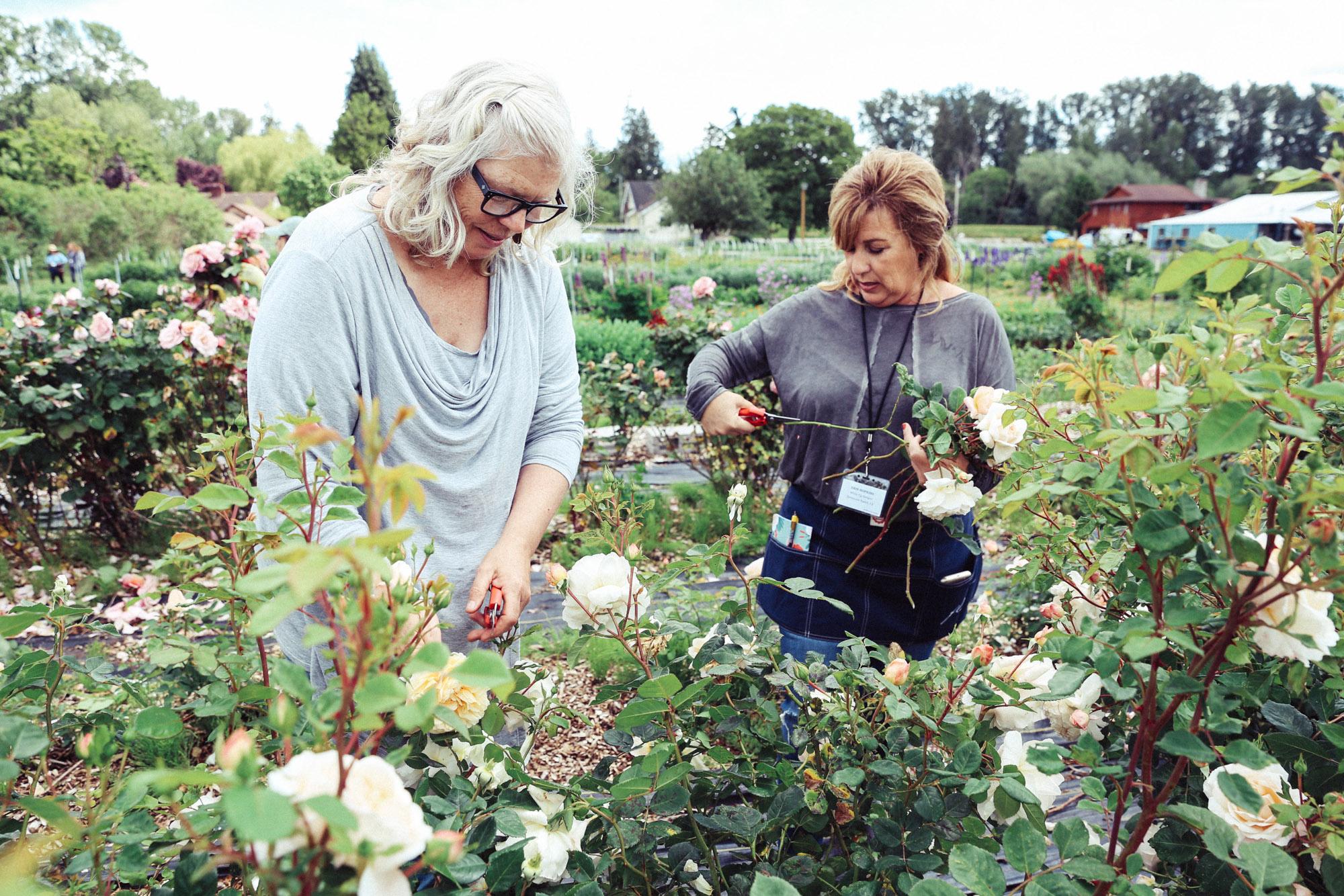 Oh Flora Travels, Floret 2017-25.jpg