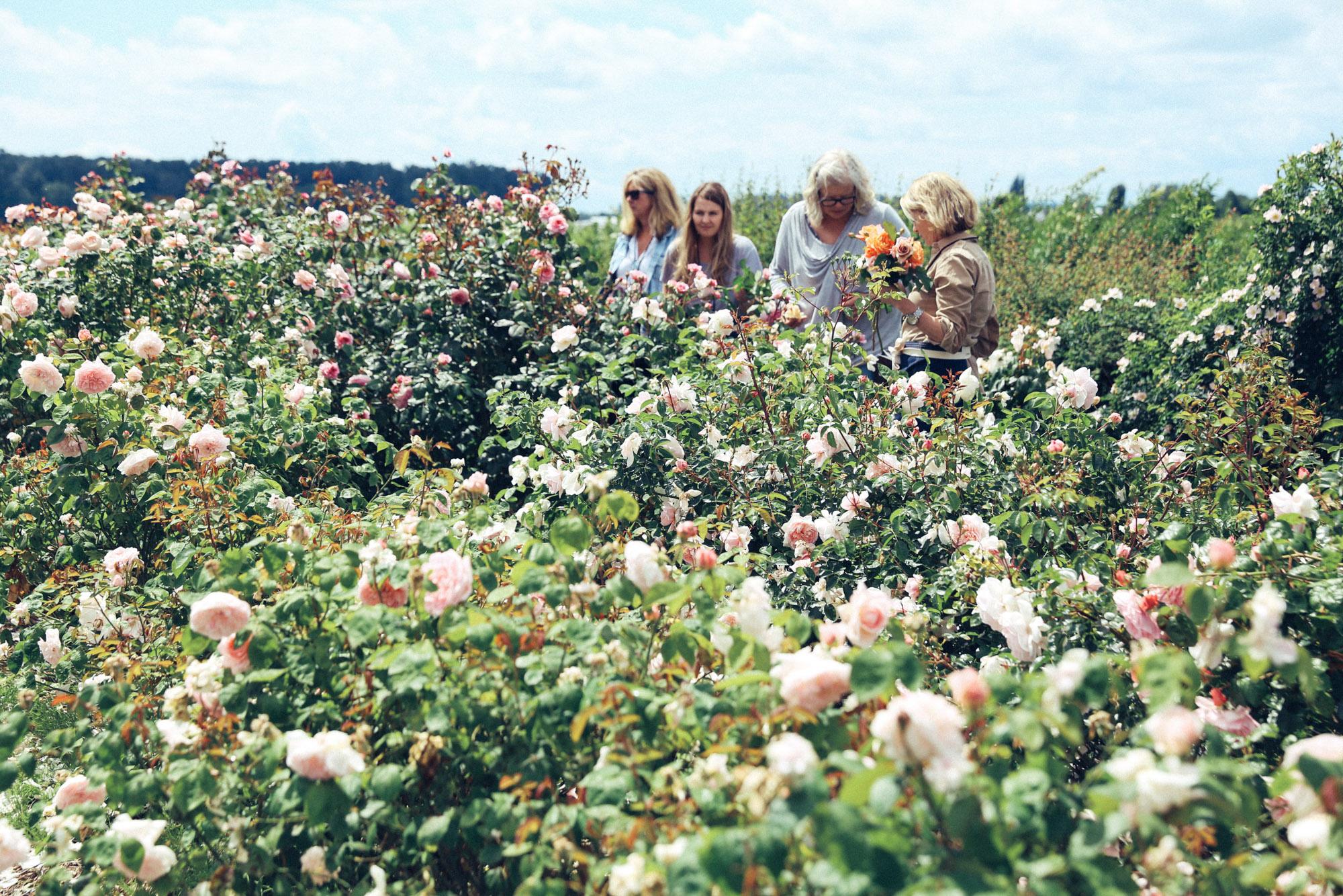 Oh Flora Travels, Floret 2017-28.jpg