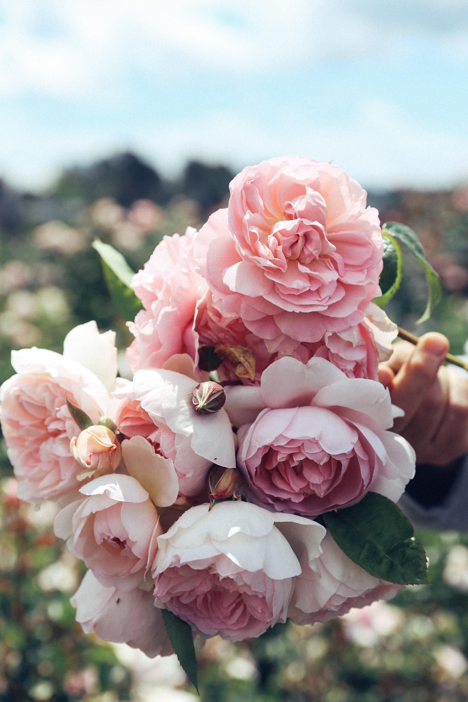 Oh Flora Travels, Floret 2017-33.jpg