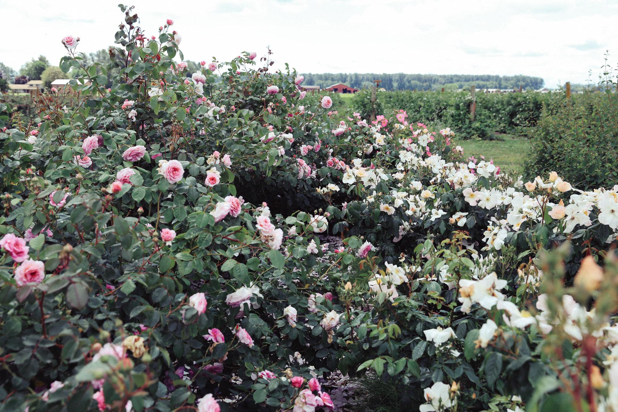 Oh Flora Travels, Floret 2017-34.jpg