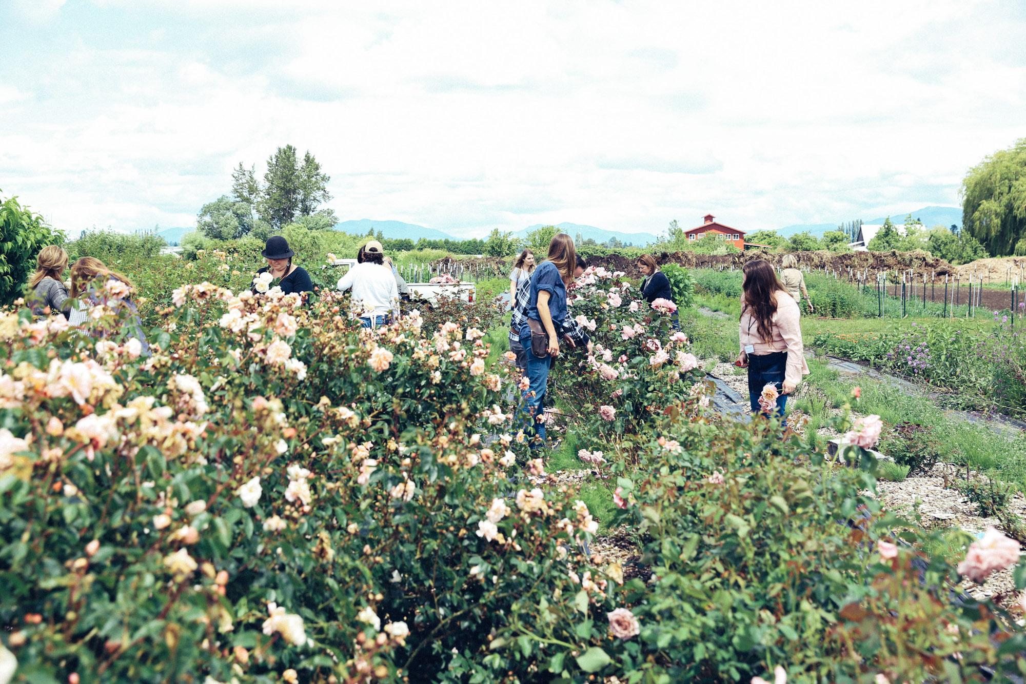 Oh Flora Travels, Floret 2017-38.jpg