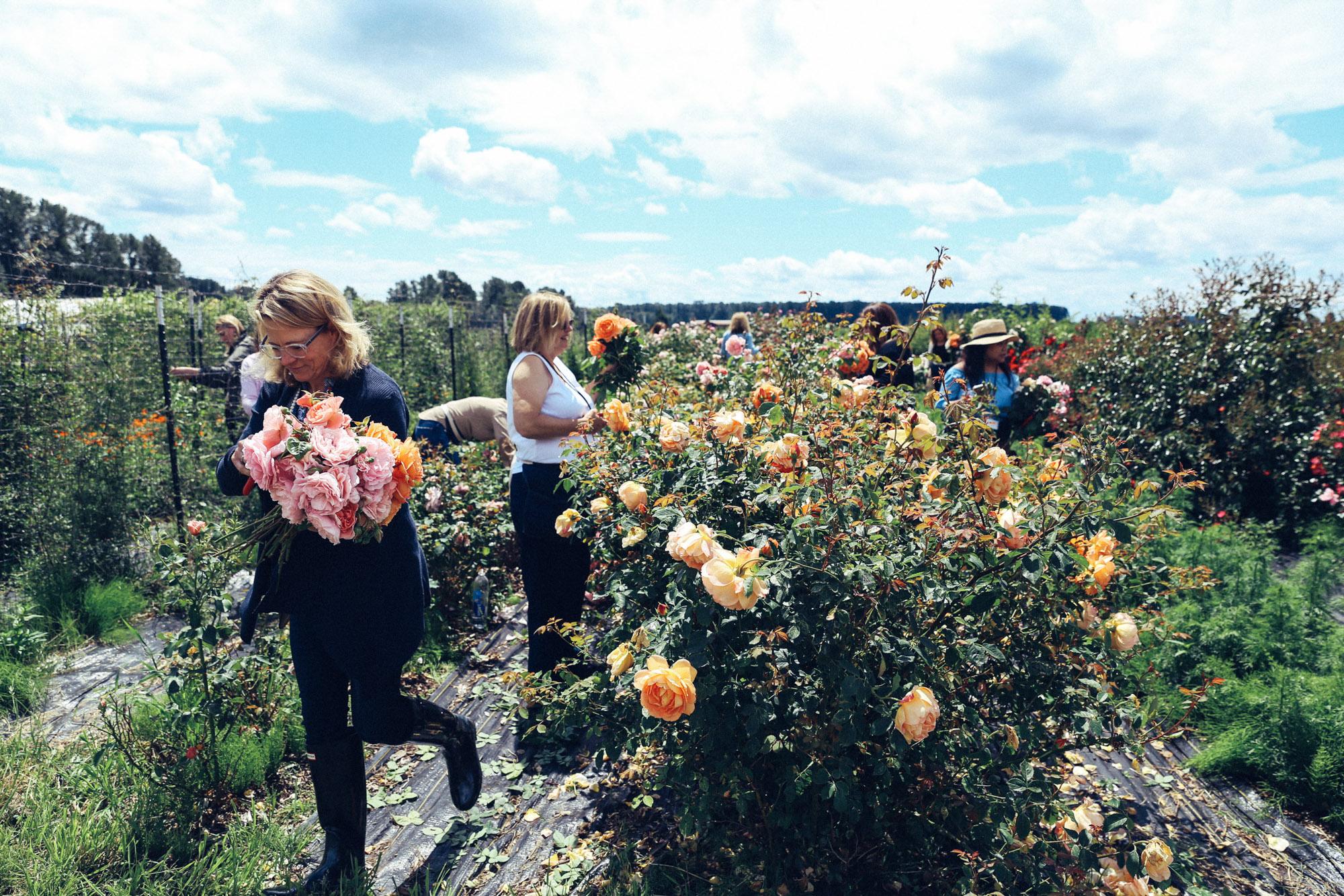 Oh Flora Travels, Floret 2017-42.jpg