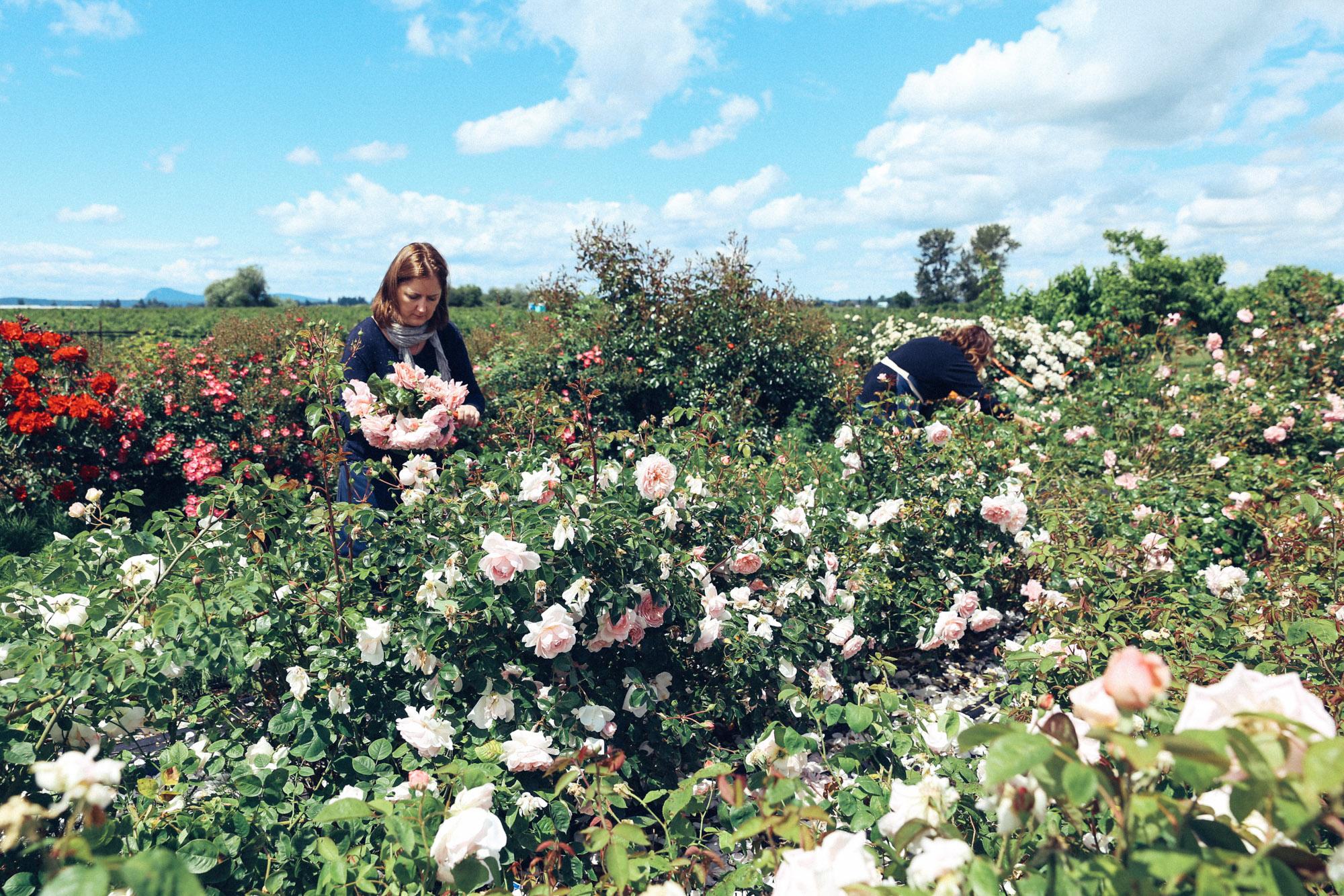 Oh Flora Travels, Floret 2017-44.jpg