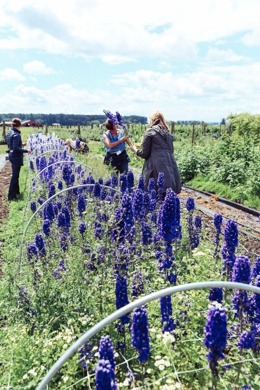 Oh Flora Travels, Floret 2017-50.jpg